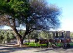 Pic donkey cart and tree