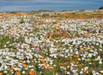 flower_season1